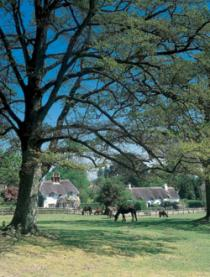 A Historic Tour of New Forest