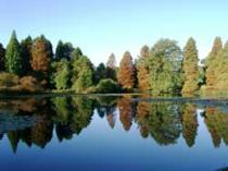 Bedgebury National Pinetum & Forest , Cranbrook