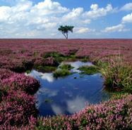 North York Moors National Park, York